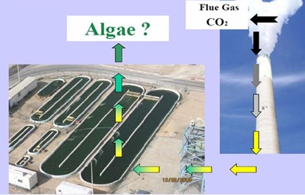 Công nghệ nuôi tảo biển bằng CO2