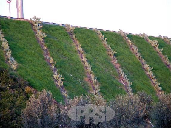 Ứng dụng Neoweb trong gia cố mái dốc, mái taluy, mái hạ lưu đập Hồ chứa nước